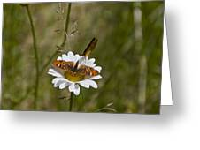 Butterflies And Daisy In A Yosemite Meadow Greeting Card