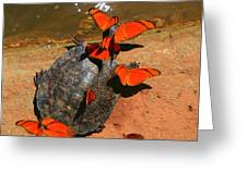 Butterflies And Turtle Greeting Card