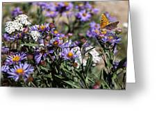 Butterflies And Wildflowers Greeting Card