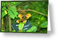 Butterflies Gentle Courtship  3 Panel Composite Greeting Card