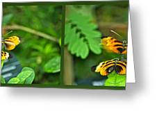 Butterflies Gentle Courtship 4 Panel Composite Greeting Card