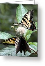 Butterflies Lunch Date Greeting Card