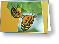 Butterflies Mating Out Of Bounds Greeting Card