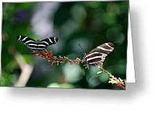 Butterflies On A Wire C Greeting Card