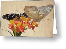 Butterflies Snd Flowers Greeting Card