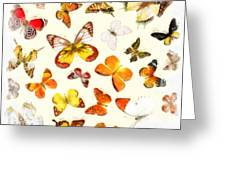 Butterflies Square Greeting Card