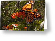 Butterflies Three Greeting Card