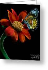 Butterfliy Greeting Card