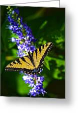 Butterflly Bush And The Swallowtail Greeting Card
