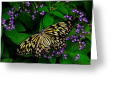 Butterfly - Yellow Green Purple Greeting Card