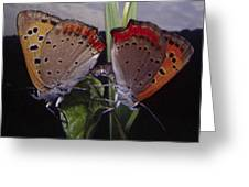 Butterfly 001 Greeting Card