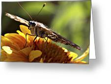 Butterfly 004 Greeting Card