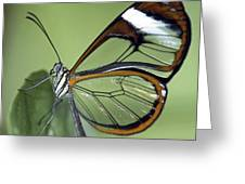 Butterfly 005 Greeting Card