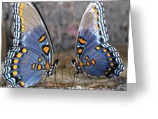 Butterfly 007 Greeting Card