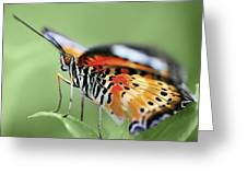 Butterfly 008 Greeting Card