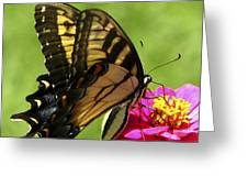 Butterfly 011 Greeting Card