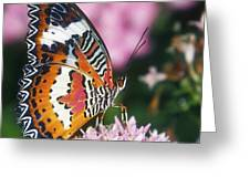 Butterfly 012 Greeting Card