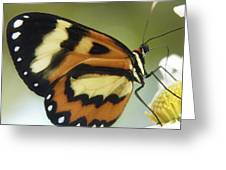 Butterfly 013 Greeting Card
