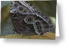 Butterfly 015 Greeting Card