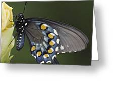 Butterfly 016 Greeting Card