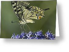 Butterfly 020 Greeting Card