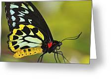 Butterfly 022 Greeting Card