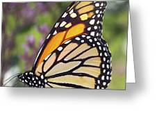 Butterfly 024 Greeting Card