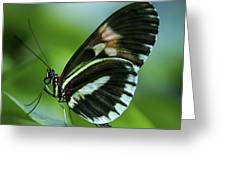 Butterfly 026 Greeting Card