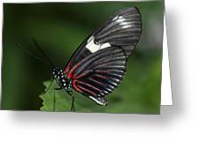 Butterfly 027 Greeting Card
