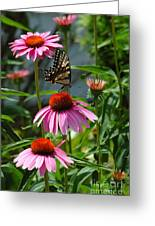 Butterfly 1 2013 Greeting Card