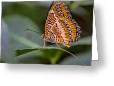 Butterfly Resplendent Greeting Card