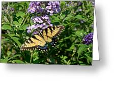 Butterfly 135 Greeting Card