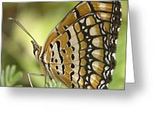 Butterfly 18 Greeting Card