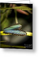 Butterfly 21 Greeting Card