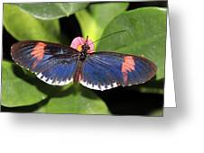 Key West Butterfly 3 Greeting Card