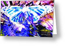 Butterfly 3 Greeting Card