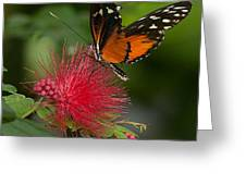 Butterfly 62 Greeting Card
