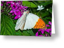 Butterfly 63 Greeting Card