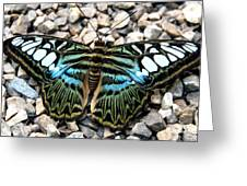 Butterfly Amongst Stones Greeting Card