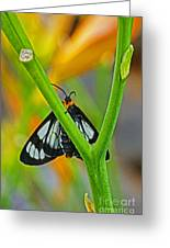Butterfly An3597-13 Greeting Card