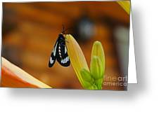 Butterfly An3606-13 Greeting Card