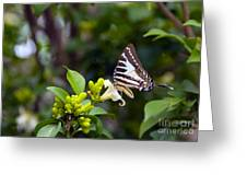 Butterfly And A White Flower Greeting Card