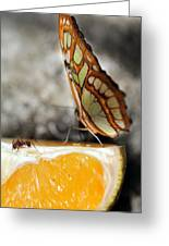 Butterfly And Ant Greeting Card