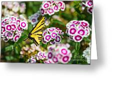 Butterfly And Blooms - Spring Flowers And Tiger Swallowtail Butterfly. Greeting Card