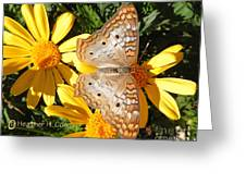 Butterfly And Daisies Greeting Card