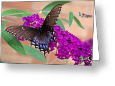 Butterfly And Friend Greeting Card