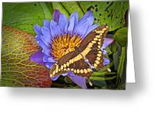 Butterfly And Lily Greeting Card