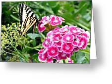 Butterfly And Sweet Williams Greeting Card