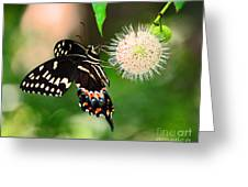 Butterfllies And The Crystal Balls Greeting Card