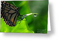 Butterfly And Water Greeting Card